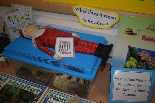 Elf-on-the-shelf-Parsons-Green-Prep-School-Fulham-SW6-London-UK-Christmas-1