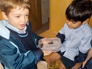 Reception-insects-Fulham-Palace-Parsons-Green-Prep-School-SW6-London-education-learning
