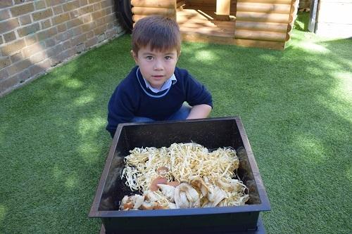 worms-wormery-eco-biodiversity-Parsons-Green-Prep-School-Fulham-SW6-London-UK-teaching-education