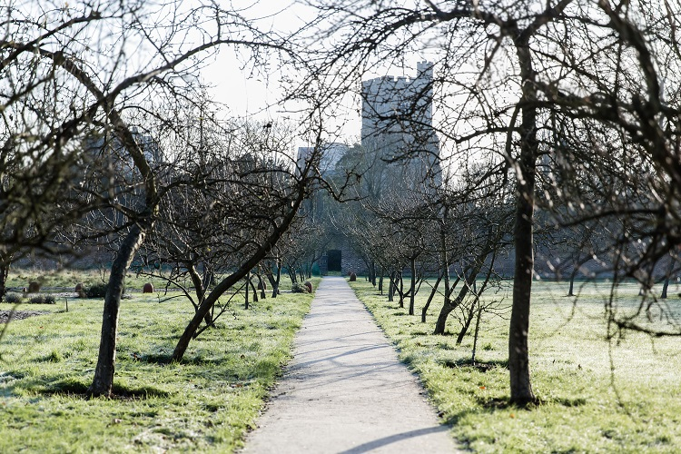 A picture of Fulham Palace from the back, with a line of trees following the pathway