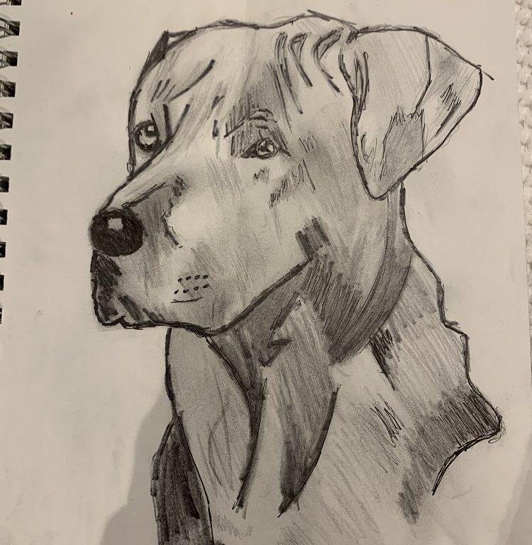 A sketch of a dog drawn by one of our students