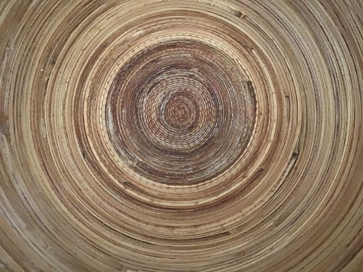The inside of a tree stump, with hundreds of rings indicating how old it is